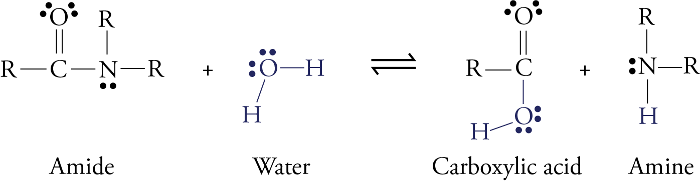Image of amide hydrolysis